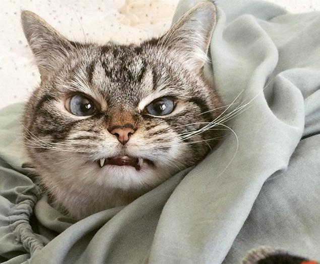 Loki, a gata com dentes de vampiro, foi adotada em um abrigo na cidade de South Burlington, em Vermont, nos EUA (Reprodução/Instagram/loki_kitteh)