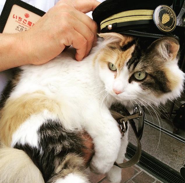 Nitama é apresentada como a nova chefe da estação de trem Kishi, no Japão (Reprodução/Instagram/suni_sunie)