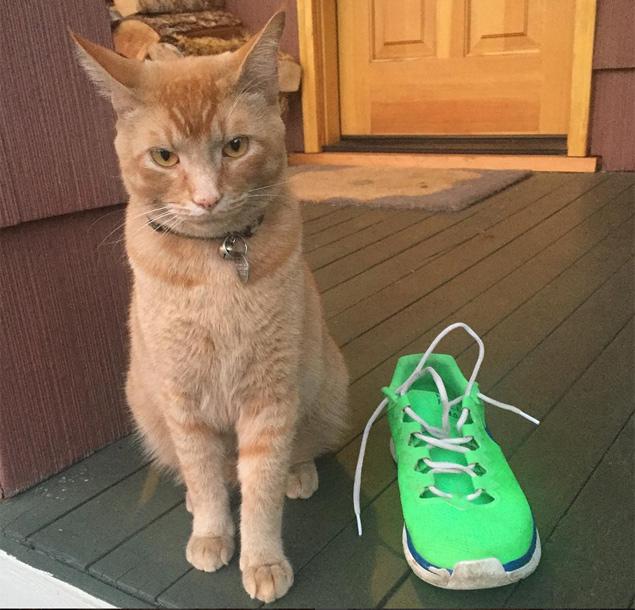 """O gato Snorri com um tênis que ele roubou; """"arrependimento zero"""", diz a dona na legenda da foto no Instagram (Reprodução/Instagram/snorrithecat)"""