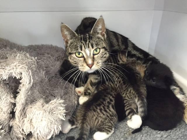Depois de rondar a clínica, a gata conseguiu se reencontrar com seus filhotes (Reprodução/Facebook/Mill Road)