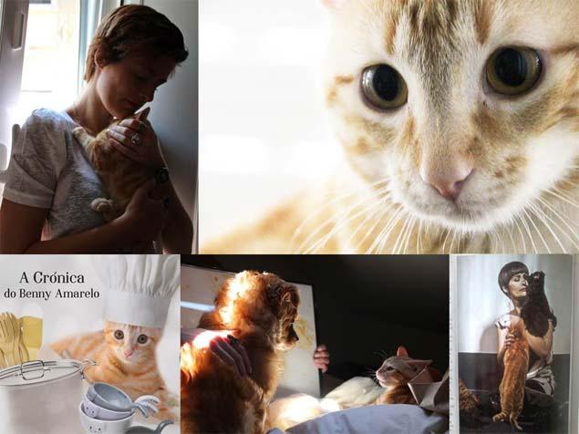 A montagem de fotos com o gatinho Benny foi publicada junto com o texto de Marta Rebelo em seu blog (Reprodução/Marta Rebelo)