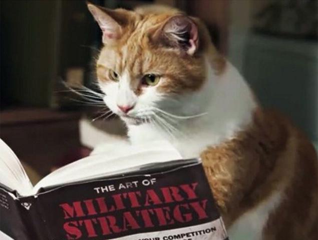 Imagem de gato lendo livro sobre a arte da estratégia militar é publicada no Instagram com a hashtag #brusselslockdown (Reprodução/Instagram/virpiro)