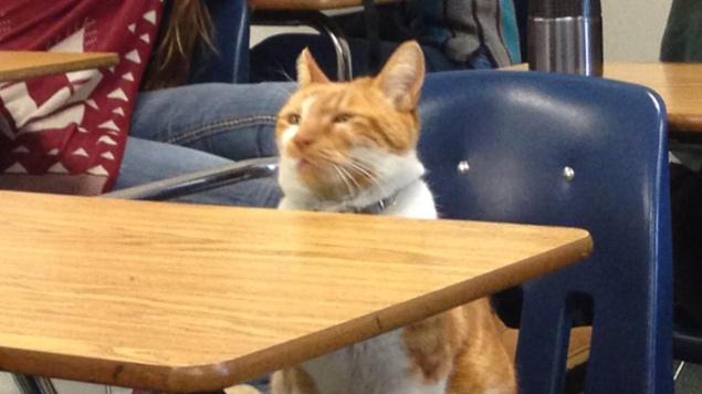 Bubba assiste atentamente à aula na escola Leland, em San Diego, na Califórnia (Reprodução/Facebook/Bubba the Cat)