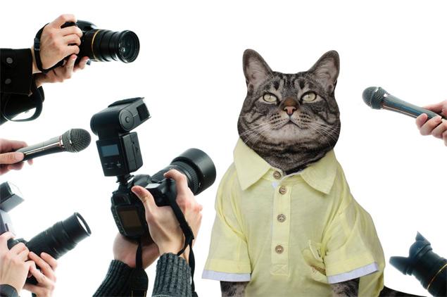 Chico, o famoso gatinho da página 'Cansei de Ser Gato', lançará uma autobiografia no dia 29 de novembro (Reprodução/Cansei de Ser Gato)