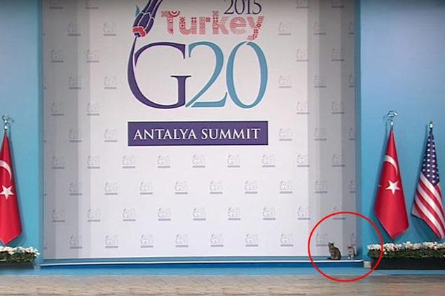 Os gatos deram uma rápida espiadinha antes de tomarem o palco do G20 (Reprodução/Youtube)