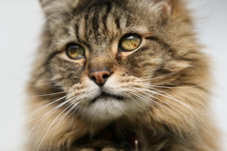 """Cena da série """"Cats Uncovered"""", do canal BBC Earth (Divulgação)"""