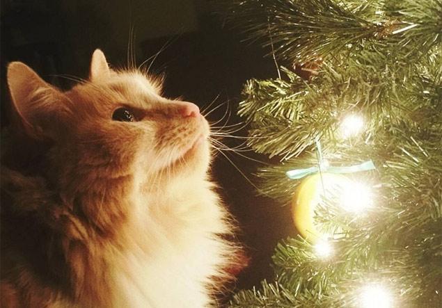 O gatinho amarelo está completamente admirado com as luzes de Natal (Reprodução/Instagram/k8ers85)