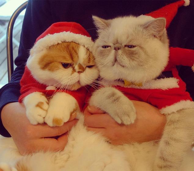 Os gatinhos Niko e Poko são abraçados por seu dono (Reprodução/Instagram/nikoandpoko)
