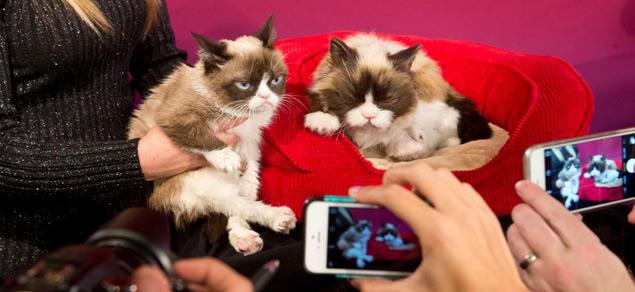 A Grumpy Cat participou da estreia de sua estátua de cera no Madame Tussauds de São Francisco (Reprodução/Facebook/Madame Tussauds San Francisco)