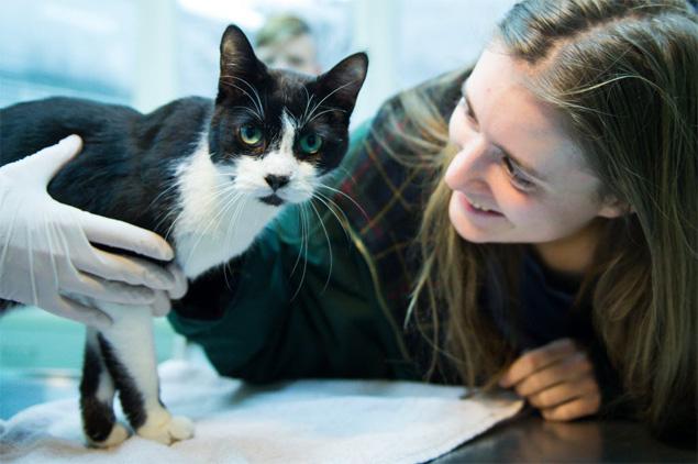 Elena Hanke, que tinha apenas 11 anos quando Miko sumiu, reencontra o gatinho no abrigo (Bernd Von Jutrczenka/AFP)