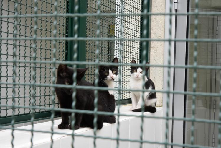 Gatinhos disponíveis para adoção no CCZ de São Paulo (Divulgação)