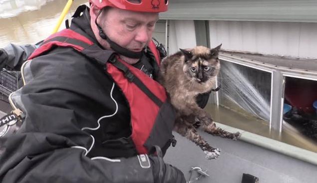 Após ser resgatada, a gatinha foi devolvida para a família dela (Reprodução/YouTube)