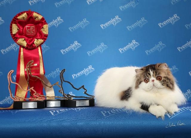 A gatinha Lambada, vencedora do prêmio 'Gato do Ano' de 2015 (Silvia Pratta/Divulgação)
