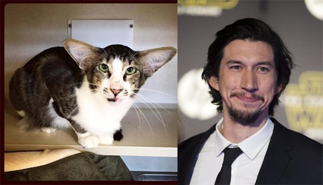 O gatinho Corey foi comparado ao ator Adam Driver no Twitter (Monmouth County SPCA/Valerie Macon/AFP)