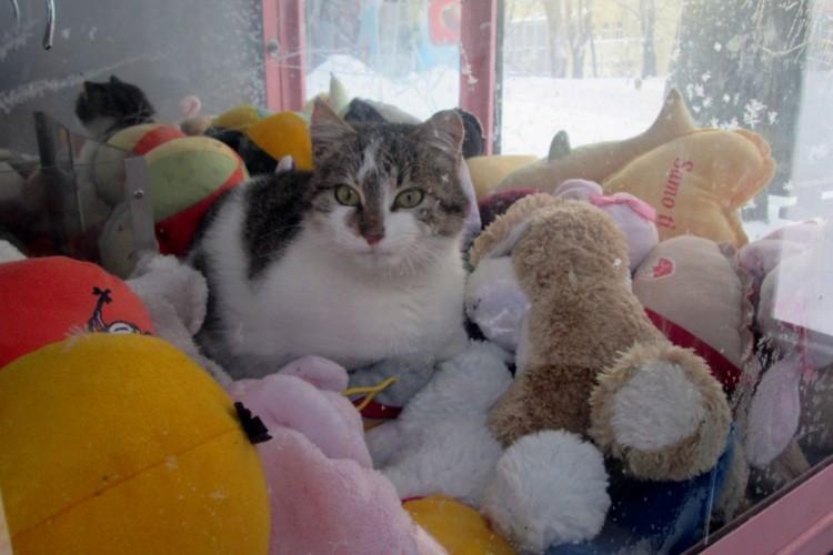 Gato se esconde em máquina de bichos de pelúcia para se proteger do frio na Sérvia (Reprodução/Twitter/New York News)