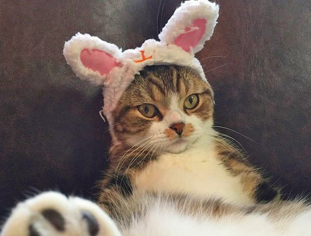 O gatinho de touca aceitou a brincadeira, mas parece não gostar muito (Reprodução/Facebook)