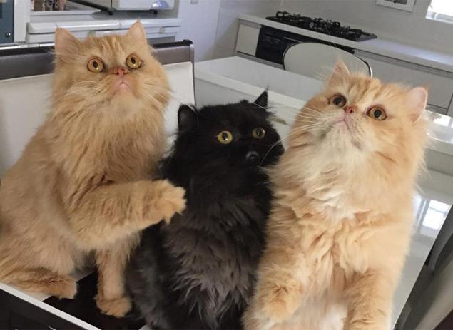 Alimentar cada gatinho separadamente é uma das dicas para evitar confusões (Reprodução/Instagram/12catslady)