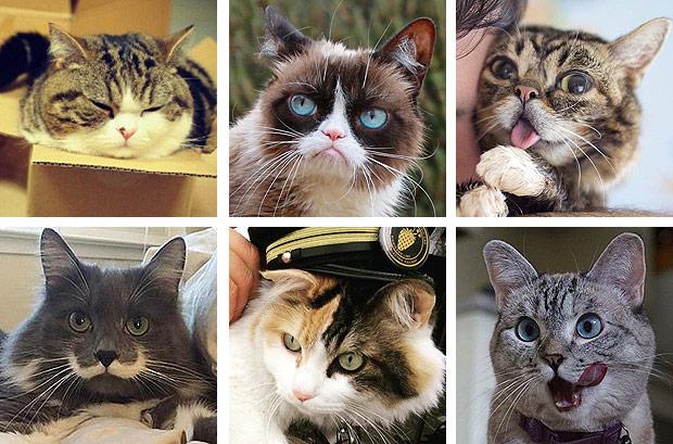 Gatos ocupam 14 posições na lista dos 100 animais mais influentes de 2016 da revista Times (Fotomontagem)