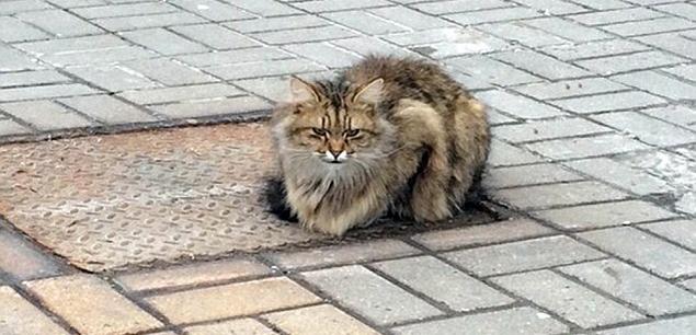 Há um ano o gatinho espera os donos em cima de um bueiro, em Belgorod, na Rússia (Reprodução/ VKontakte)