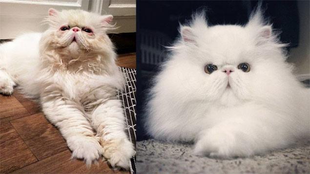 À esquerda, Brimley no início de sua recuperação; à direita, o gatinho atualmente (Reprodução/Facebook/Brimley)