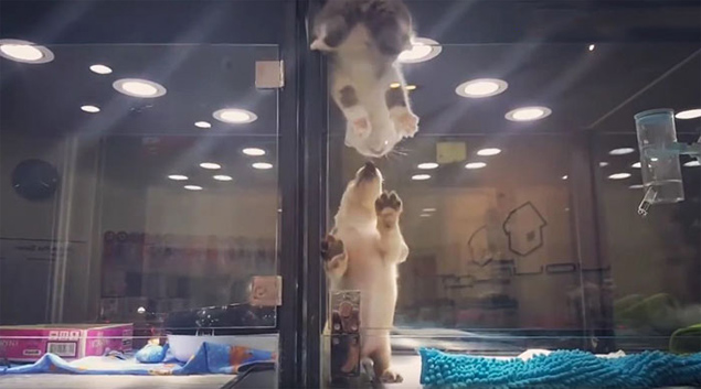 O gatinho fez um belo esforço para se encontrar com o cachorrinho do outro lado (Reprodução/Facebook/JoLinn Pet House)