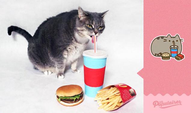 A gatinha Jackie em ensaio que imita as poses do personagem Pusheen (Reprodução/Facebook/Les Populaires)