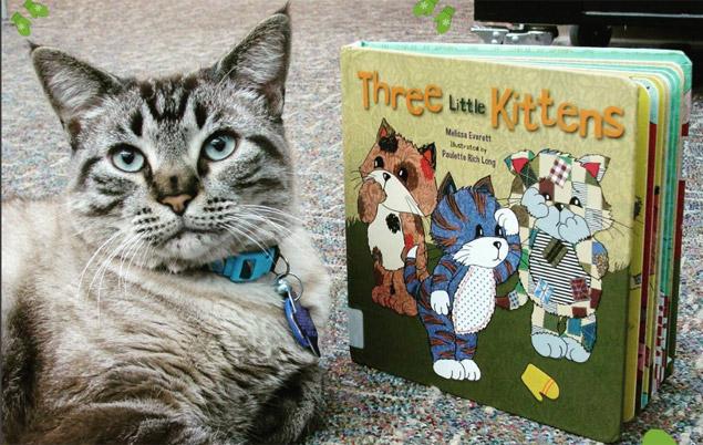 O gatinho Browser descansa ao lado de um livro na biblioteca (Reprodução/Instagram/wslibrary)