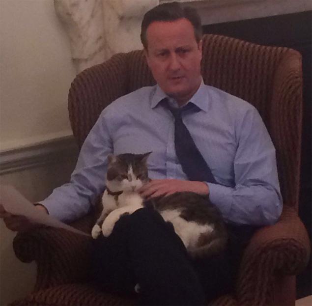 """Para provar que ama Larry, Cameron postou no Twitter uma foto com gato, com a legenda """"Prova"""" (Reprodução/Twitter)"""