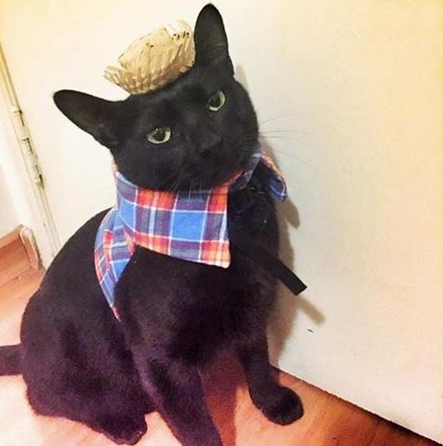 O Gato Preto já está vestido de caipirinha esperando por você no arraial da Catland (Divulgação)