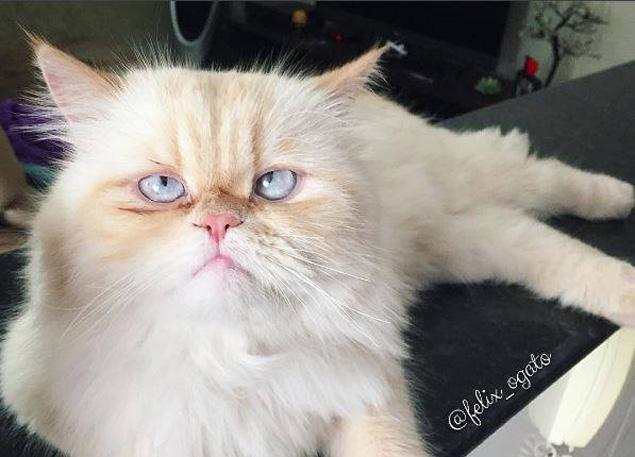 Félix parece a versão brasileira e vesguinha da Grumpy Cat, a gatinha rabugenta (Facebook)