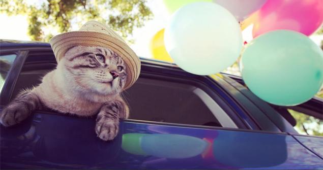 Poonchic gosta de sentir seus bigodes ao vento enquanto dá uma volta de carro (Reprodução/Instagram)