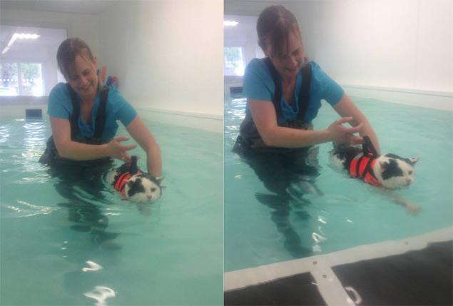 Charlie faz exercícios na piscina com a supervisão da instrutora Tracy Allen (Divulgação/K9 Splash Hydrotherapy)