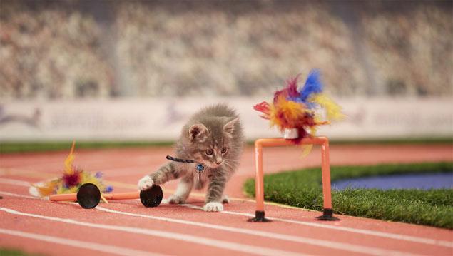 O gatinho Picatso avalia as barras assimétricas do atletismo (Divulgação//Hallmak Channel)
