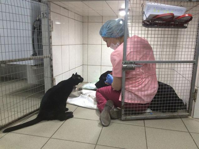 O gato Lyutsik acompanha atendimento veterinário a um cão (Lyutsik)