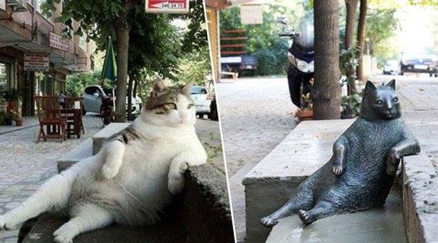 Tombili relaxando na calçada e a estátua em sua homenagem, construída no mesmo local. (Reprodução/Facebook/@tombilikedi)