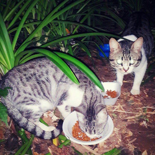 Dóceis, esses dois gatinhos foram abandonados no parque e encaminhados para adoção