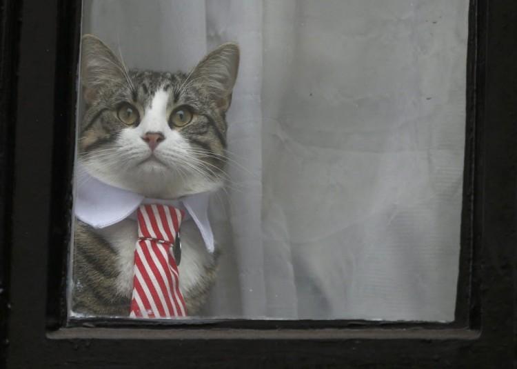 Gato de Assange surge na janela da embaixada do Equador em Londres (Peter Nicholls/Reuters)