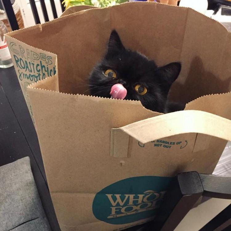 Foto do gatinho Willow, que foi resgatado de um criador irresponsável e hoje tem milhares de seguidores no Instagram  (Reprodução/Instagram/willowthesquishycat)