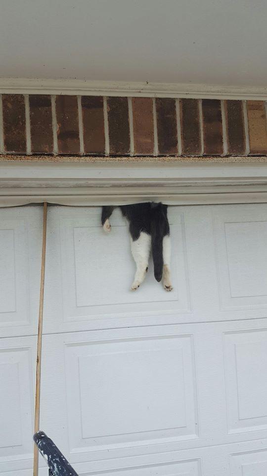 A gata Bella antes de ser resgatada pelo policial e os moradores (Divulgação/Ascension Parish Sheriff's Office)