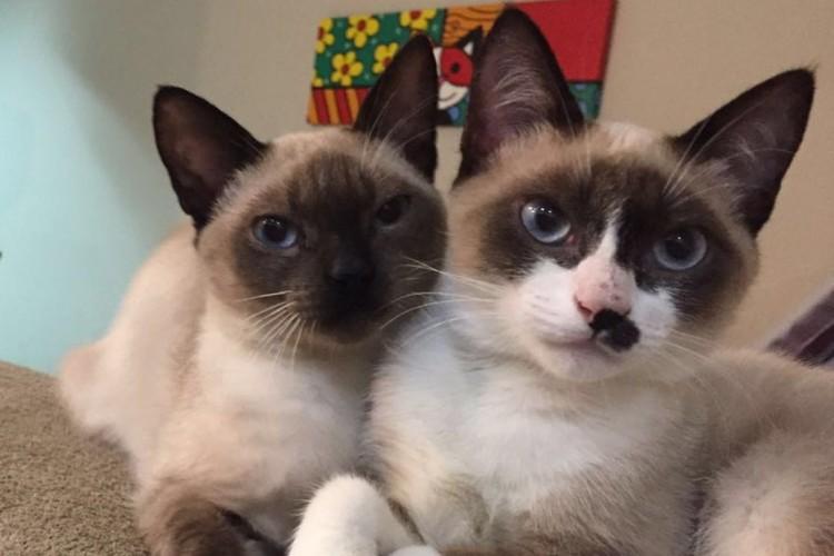 Os gatinhas Princesinha (à esq.) e Pequenina, para adoção na ONG Catland (Divulgação)