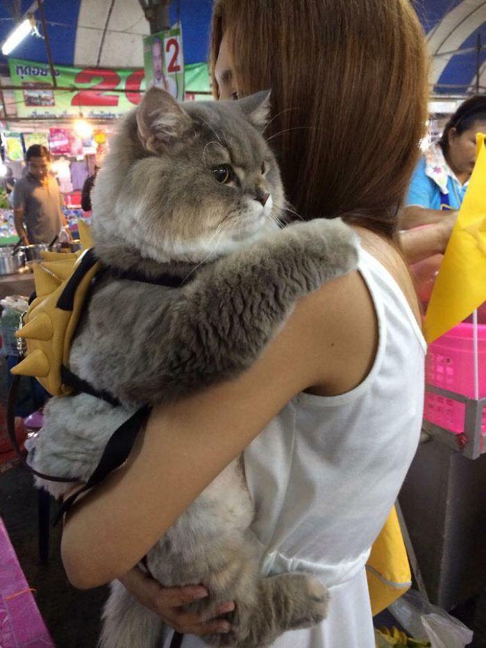 Gato Bone é uma celebridade na Tailândia