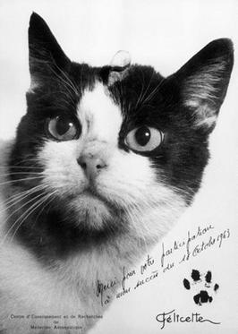 Cartão-postal da década de 1960 em homenagem à gatinha