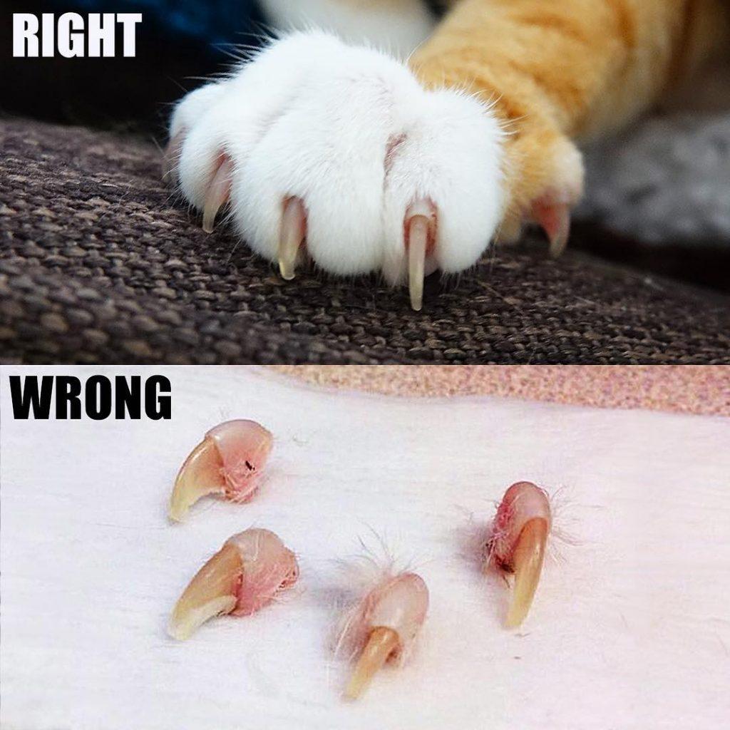 Post contra a cirurgia mostra uma pata de gato normal e falanges cortadas após procedimento (Instagram/coleandmarmalade)