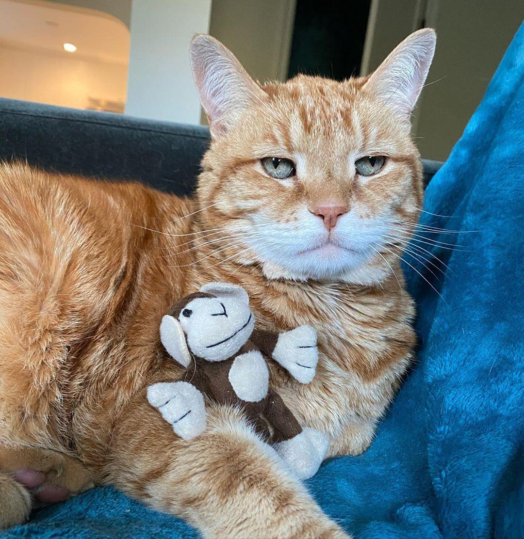 Seu gato pode estar incomodado com a sua presença durante a quarentena; saiba o que fazer