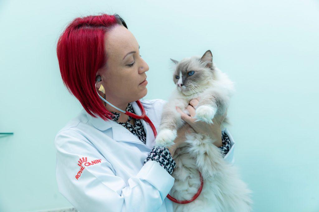 A veterinária Vanessa Zimbres, dona da clínica Gato é Gente Boa (Crédito: Julio Salvo)